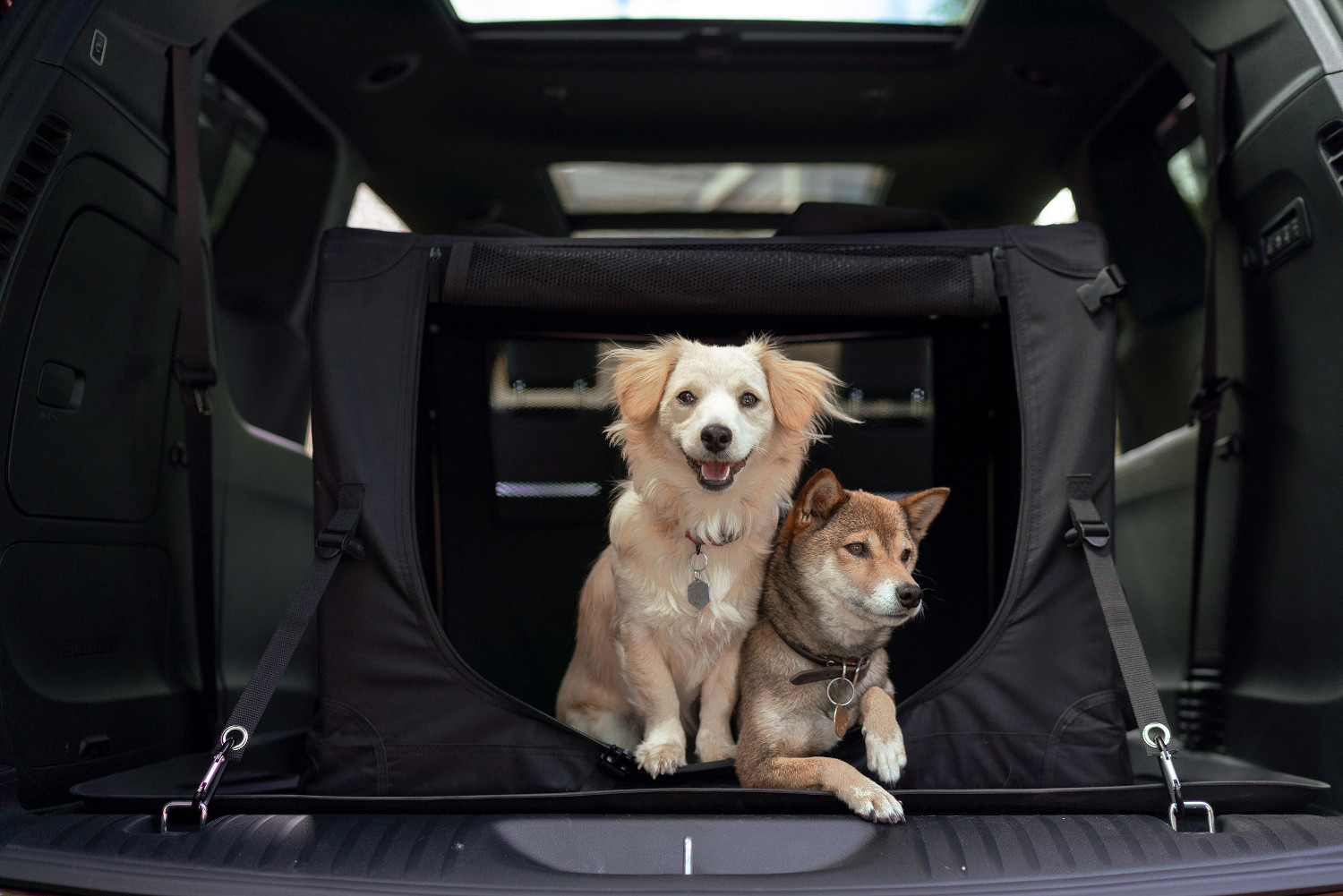 Autotrader best cars for dogs